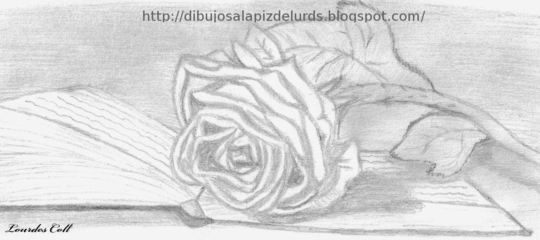 Rosas Dibujadas A Lapiz