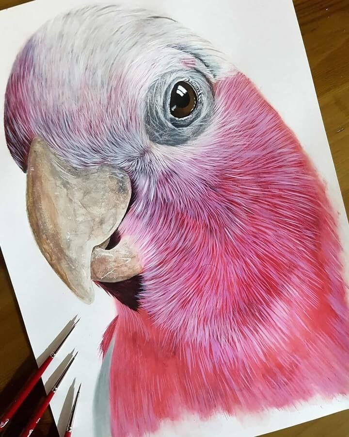 01-Galah's-Cockatoo-Kyle-Duca-Animal-Paintings-www-designstack-co