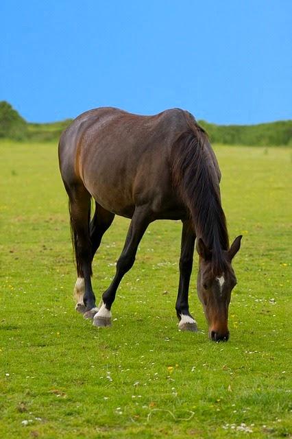Galleria fotografica di cavalli cavalle for Cavalli bolzano