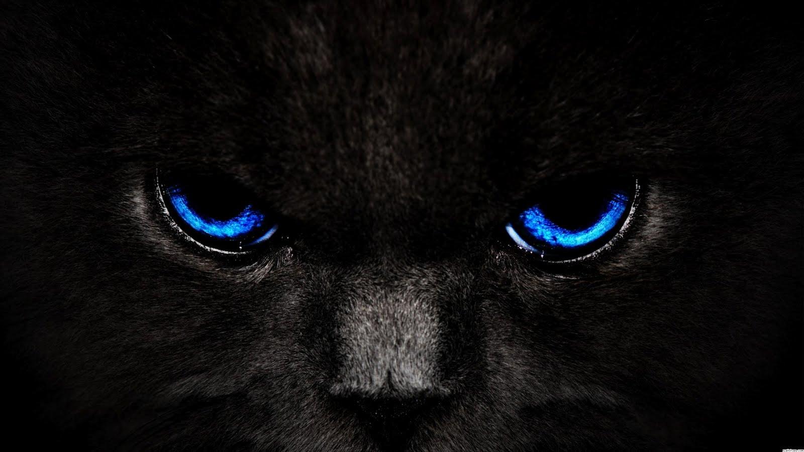 red cat eyes wallpaper - photo #9