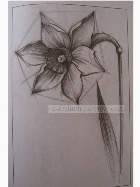 رسم زهرة بقلم الرصاص للمبتدئين Dz Fashion