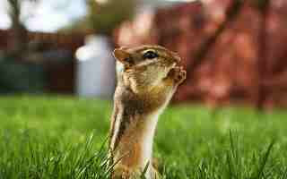 एक शिक्षाप्रद कहानी-गिलहरी की भक्ति | Motivational Story In Hindi | Gyansagar ( ज्ञानसागर )