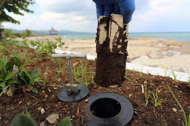 eliminar plagas termitas castellón