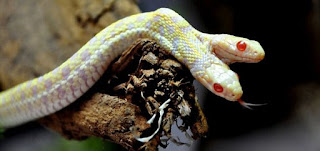 Snake Facts In Hindi-Snakes Information