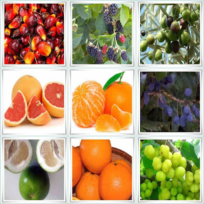 Fruit Names Starting With O