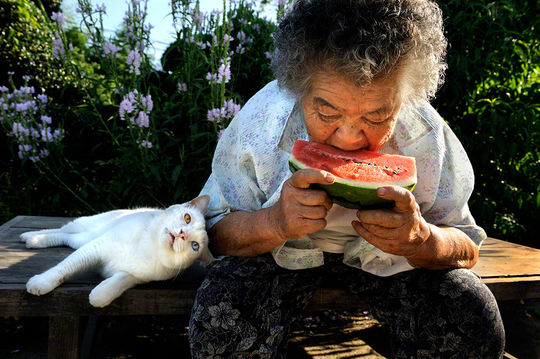 misao the big mama and fukumaru the cat