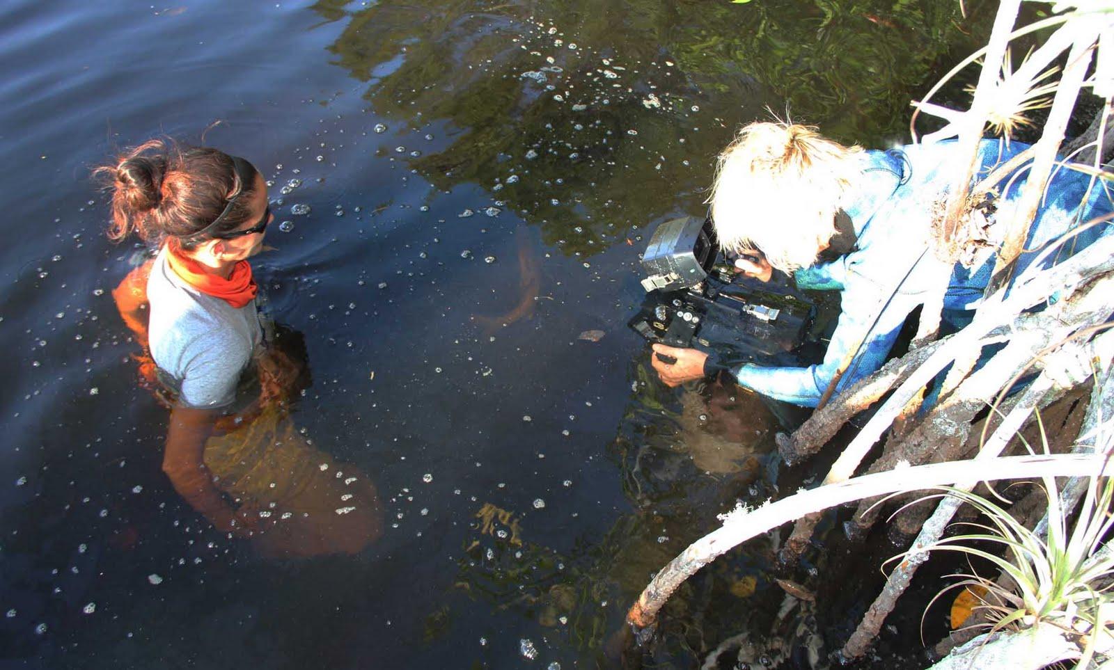 The Adventures Of Shark Girl Everglades Biology Gator