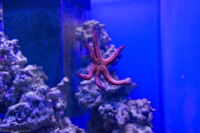 Москвариум морская звезда фото