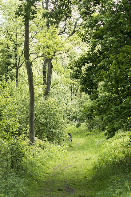 A Ride in Shenley Wood