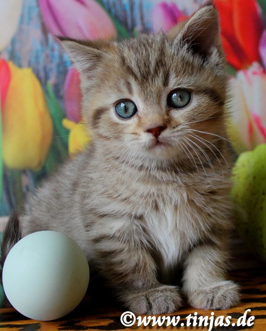 BKH Katzenkind nieldich