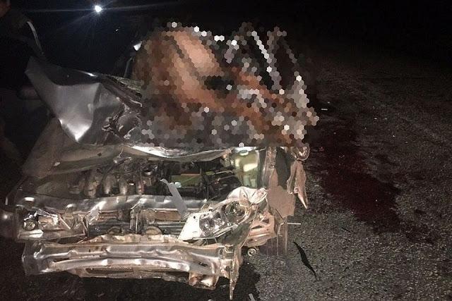 В Баймакском районе в ночь на 2 июня на трассе Ира-Магнитогорск возле деревни Уметбаево Ваз 2112 наехал на табун лошадей.