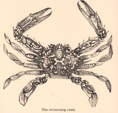 clip art crab