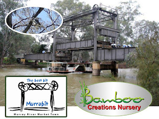 Bamboo creations victoria going to murrey river at murrabit