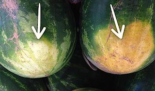 Πώς να ξεχωρίζετε το καλό καρπούζι