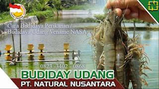 AGEN NASA DI Kampung Rakyat, Labuhanbatu Selatan - TELF 082334020868