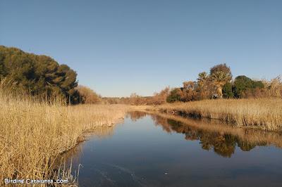 Desembocadura del Gaià (Altafulla)