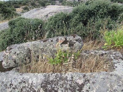 Necrópolis de Malamoneda
