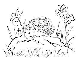 Hedgehog coloring page 5