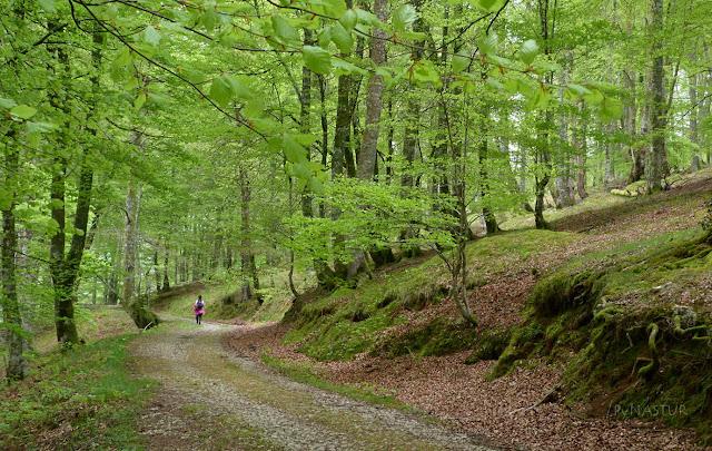 Hayedo del Rio Infierno - Parque Natural de Redes - Asturias
