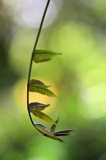 Tropical Leaf Bokeh