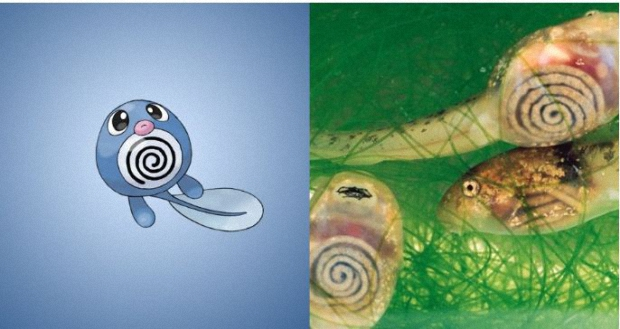 Poliwag is based on translucent tadpoles