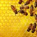 Απίστευτο: Μέλισσες δείχνουν σεβασμό στις χριστιανικές εικόνες