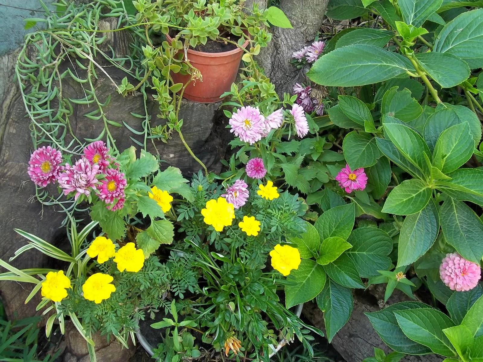 Jardines en macetas for Plantas en macetas