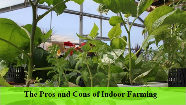 The pros and cons of indoor vertical farming world for Fish farming pros and cons