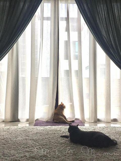 """Các """"con sen"""" đang phát dồ lên vì boss mèo béo ngồi gác chân oai vệ"""