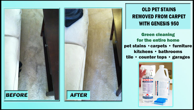 Best Carpet Cleaner And Stain Remover How To Remove Cat