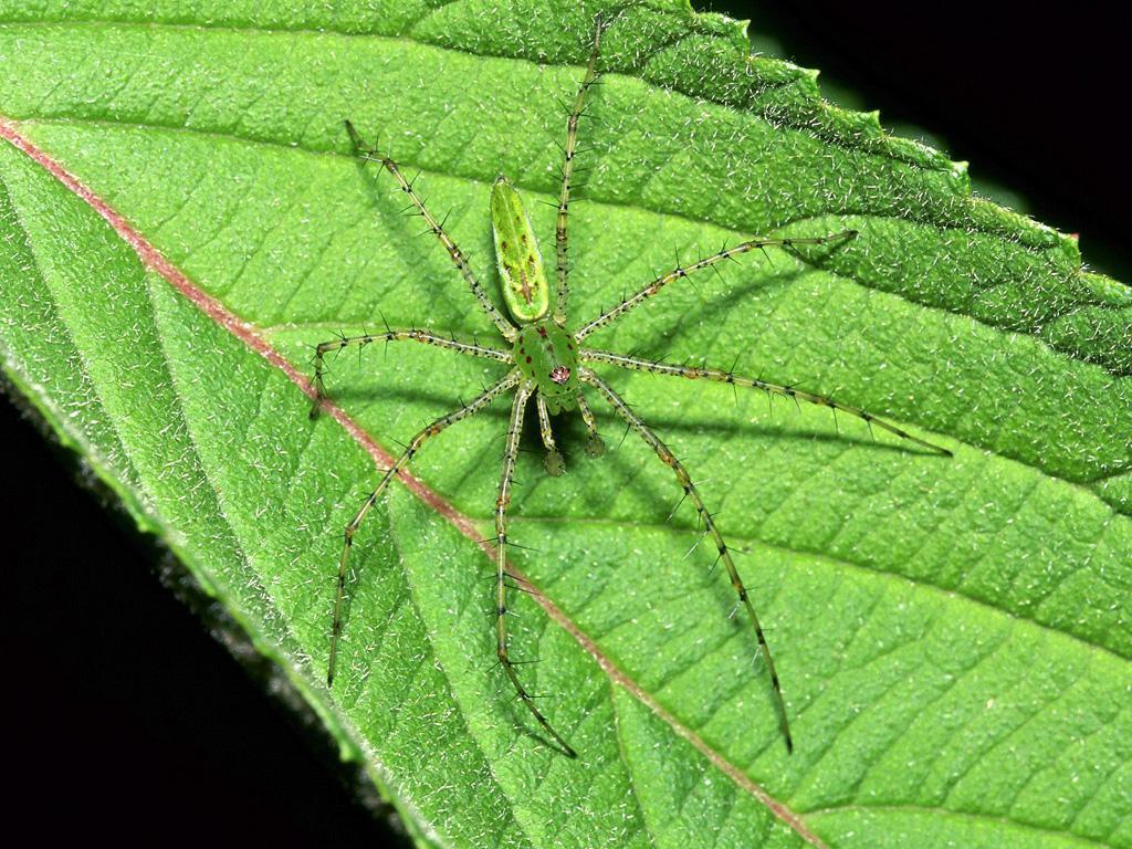 Imazes Beautiful Insect
