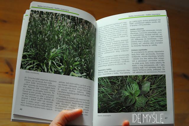 hasło babka lancetowata i babka zwyczajna, recenzja książki, dzikie rośliny jadalne