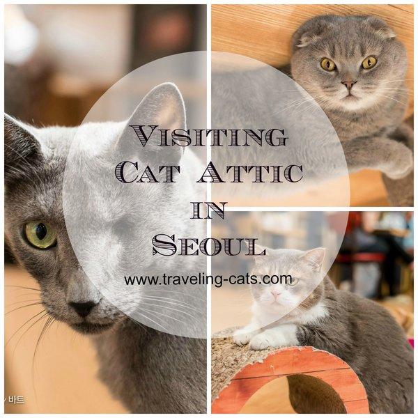 visiting cat attac in seoul