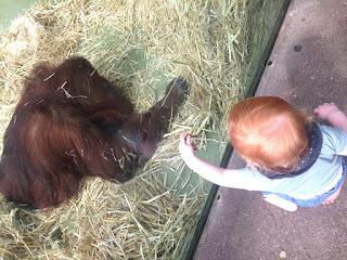Das Kind trifft Tilda, die alte Orang Utan Dame aus dem Kölner Zoo