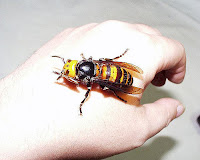 http://www.top10-facts.com/2018/03/asian-giant-hornet.html