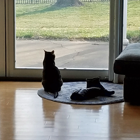 image of Sophie the Torbie Cat sitting in front of a window, looking out at the yard, beside a pair of my boots