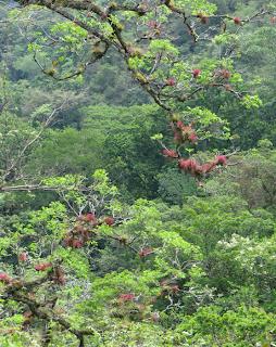 Costa Rica tropical vegetation