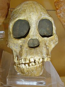 Taung Child, Initially depicted as a supposed ancestor of man. However, contemporary evolutionists can no longer maintain that it represents such an ancestor-because it subsequently transpired that the skull belonged to a young gorilla!