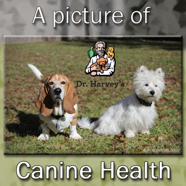 Dr. Harvey's helps make Bentley and Pierre the picture of Canine Health