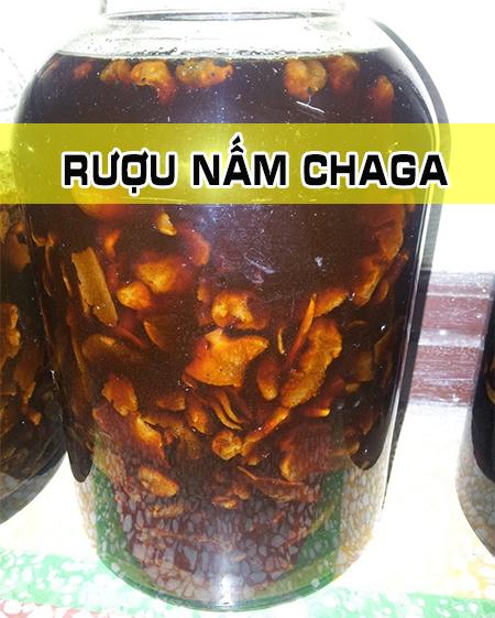 Những hình ảnh về nấm Chaga ở rừng Taiga Siberia Nga