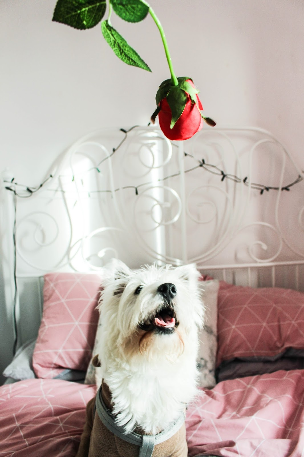 7 Ideas For A Romantic Night In - Shay Kennedy