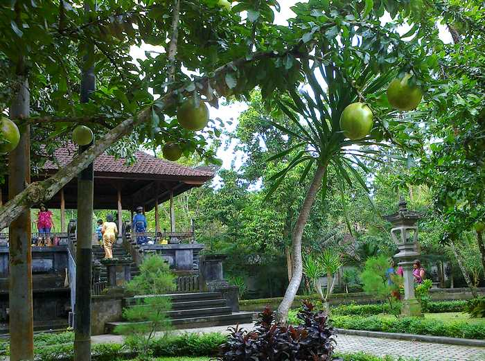 Fruit tree in Tirta Empul