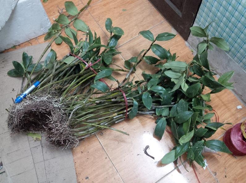 Hình ảnh thực tế Kiều Hồng cung cấp bởi PhongLanRung.com