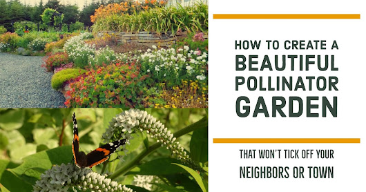 How To Create A Beautiful Pollinator Garden 🌼 That Won't Piss Off Your Neighbors Or Town