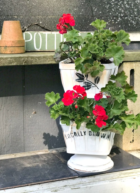 Making a tiered basket planter for geraniums.