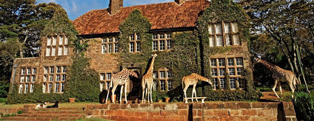 hotel de jirafas