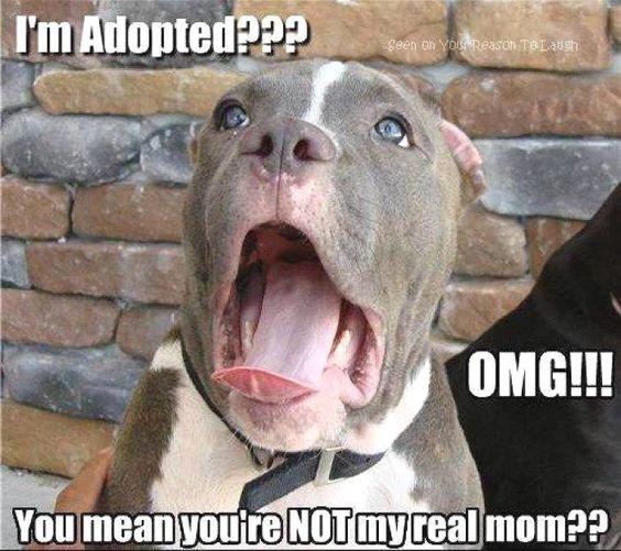 I'm adopted??? OMG!!!