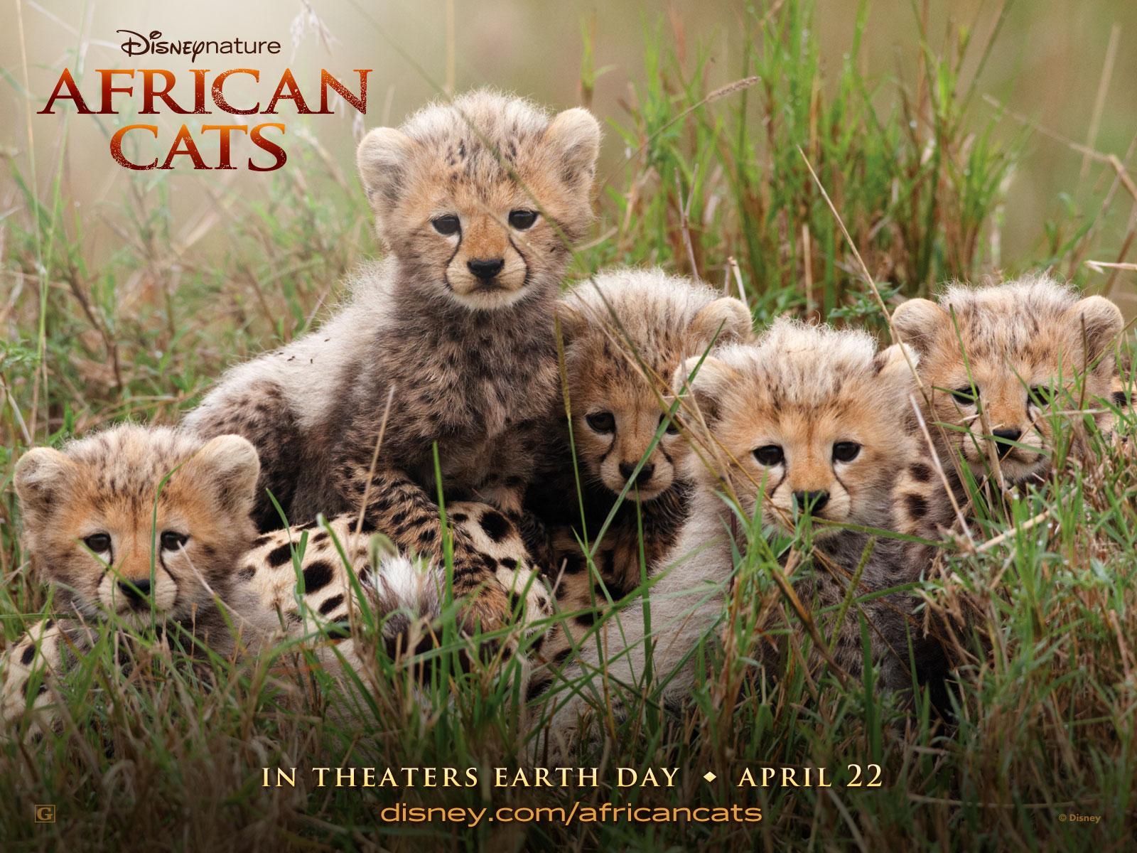 https://3.bp.blogspot.com/-olr9v8xdUQg/TacdHssvU-I/AAAAAAAAAbg/sp4Ywxq_SnU/s1600/African-Cats-Wallpapers-1600x1200-1.jpg