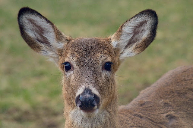 My Beautiful Doe Looked Just Like THIS