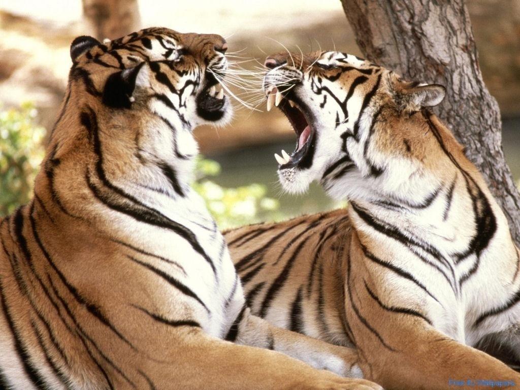 Animals: Wild Animals